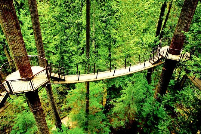 Capilano Bridge and Sea to Sky Gondola Private Tour photo 13