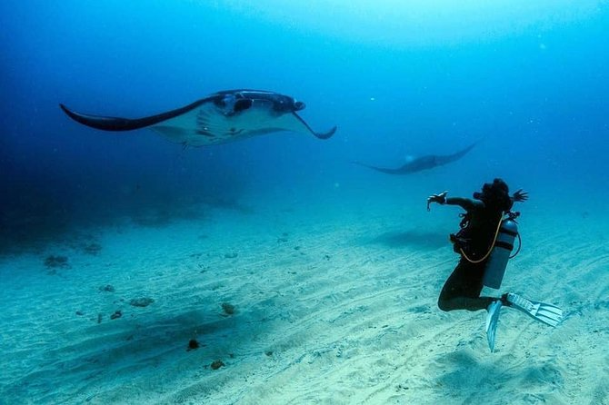 Fun Dive Package from Lembongan
