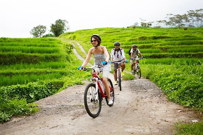 Bali UNESCO World Heritage Site: Jatiluwih Rice Paddy Cycling Tour