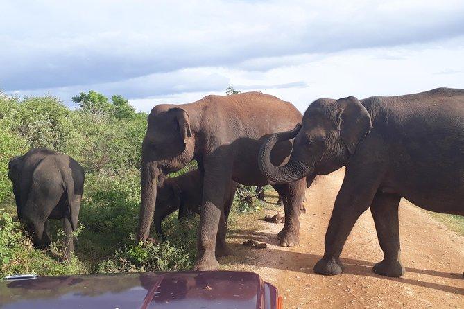 Udawalawe Safari Day Tour From Kandy