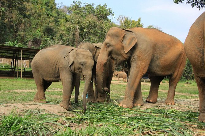 Chiang Mai : Elephant Jungle Sanctuary with round trip transfer photo 4