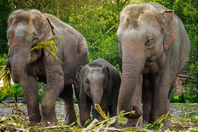 Chiang Mai : Elephant Jungle Sanctuary with round trip transfer photo 3