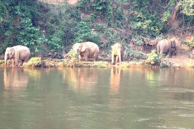 Trek hill tribes and wild elephants observation photo 15