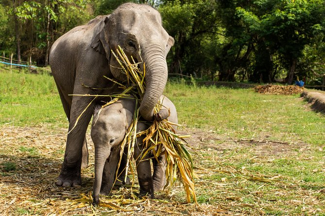 Chiang Mai : Elephant Jungle Sanctuary with round trip transfer photo 8