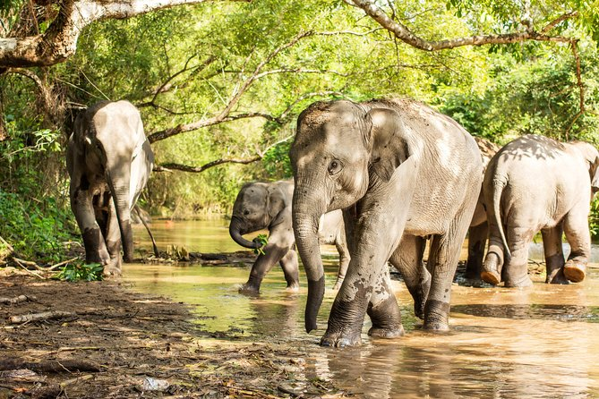 Chiang Mai : Elephant Jungle Sanctuary with round trip transfer photo 7