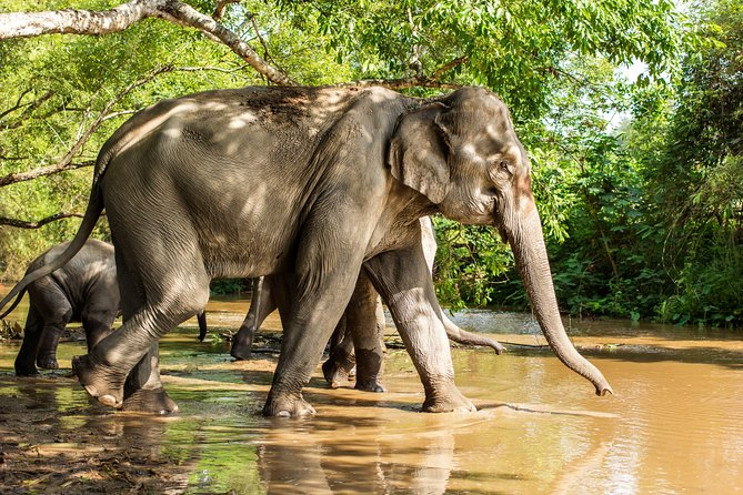 Chiang Mai : Elephant Jungle Sanctuary with round trip transfer photo 6