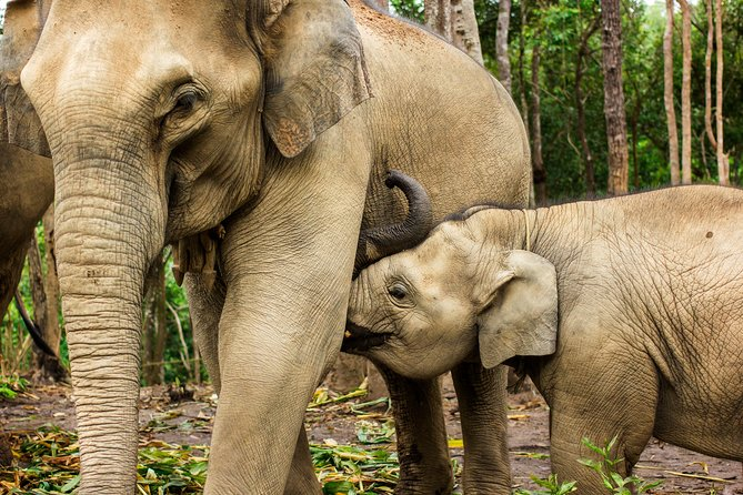 Chiang Mai : Elephant Jungle Sanctuary with round trip transfer photo 2