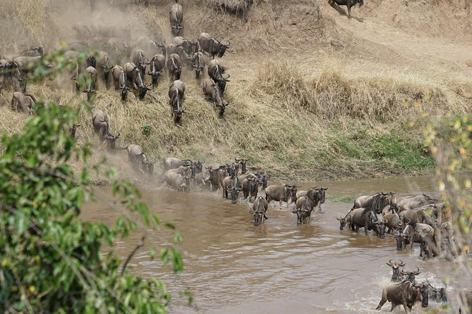 6 Days Migration Crossing in Mara River Northern Serengeti