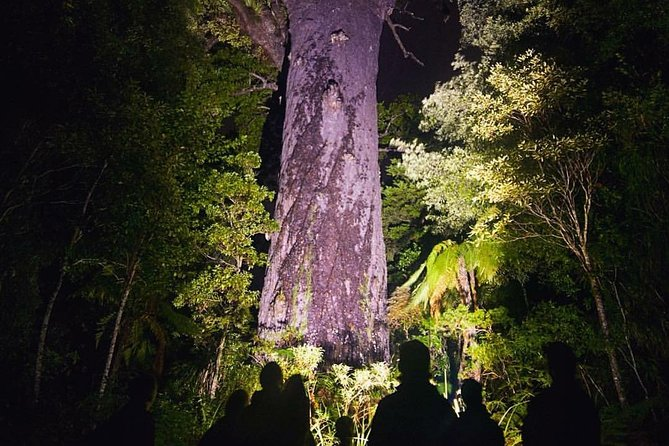Waipoua Forest: Twilight Encounter - Maori Cultural Eco Night Tour