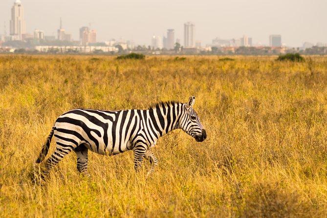 Nairobi National Park - Day Excursion