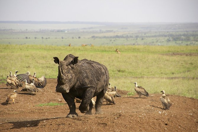 Half Day Nairobi National Park and Elephant Ophanage Tour From Nairobi