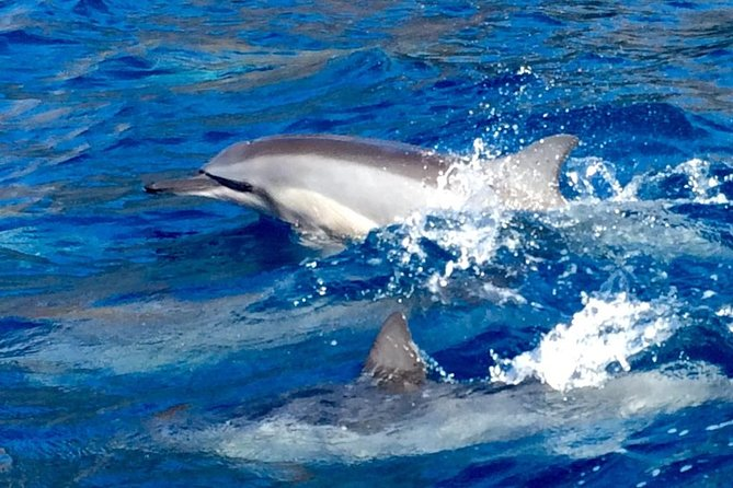 Half Day Dolphin + Snorkel Tour from Lahaina