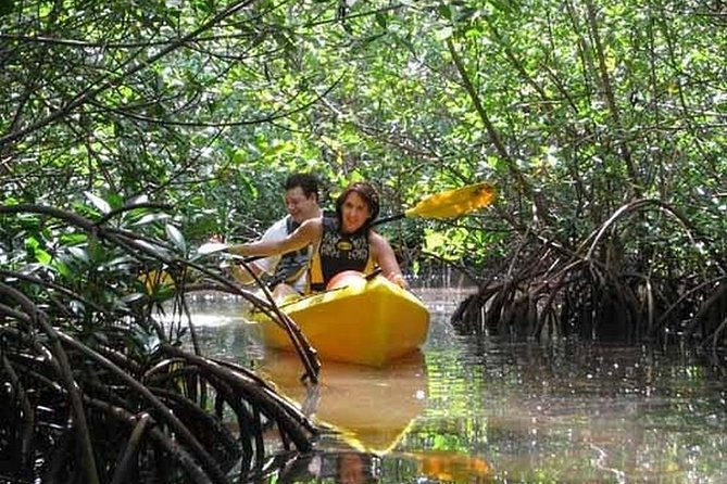 Guided Kayak Excursion 3 hours