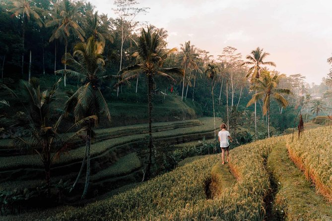 Ubud Swing, Rice Terrace and Waterfall Highlights Tour