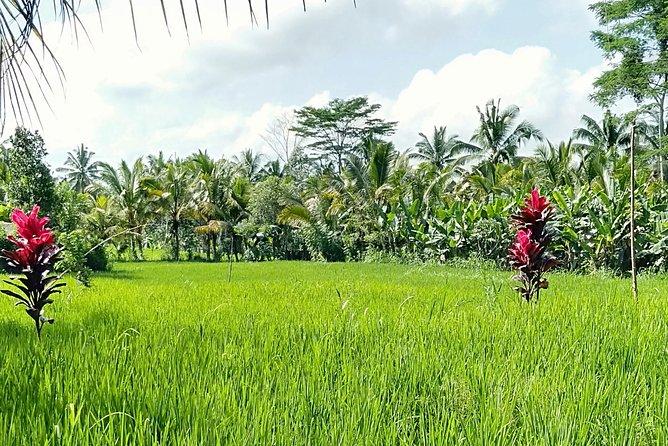 Rice Field Trekking and Village Tour