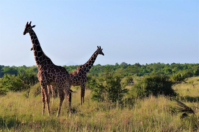 5 Days 4 Nights Selous & Mikumi National Park
