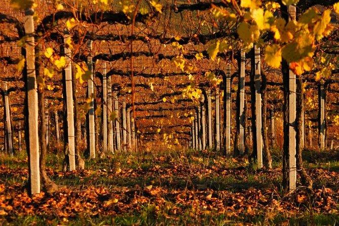 Alba Wine Tours, Private Tasting Experience around Langhe area.