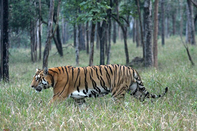 3-Hour private Safari in Pench National Park