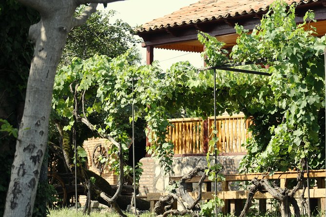 vakho oqruashvili wine cellar