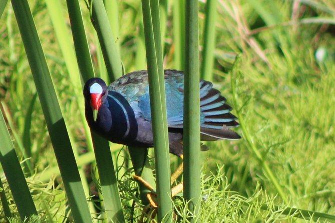 Birding Pipeline Road