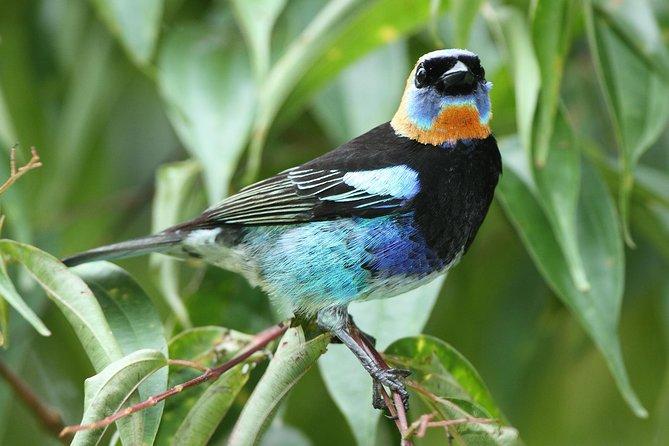 Birding Metropolitan Natural Park