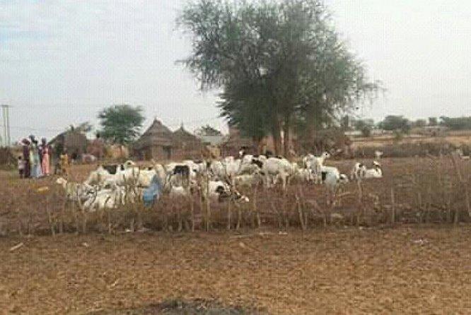 A Peul village