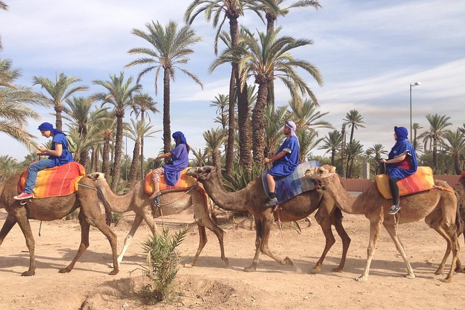 activities in Marrakech camel ride tour in palm grove