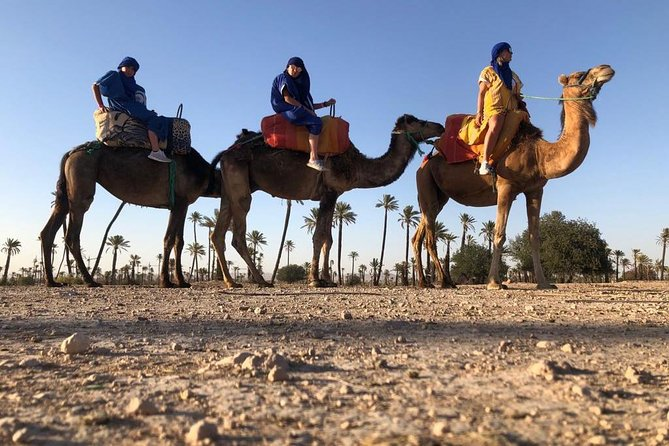 Sunset Camel Ride in the Palm Groves of Marrakech