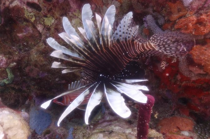 Invasive Lionfish Containment Specialty photo 4