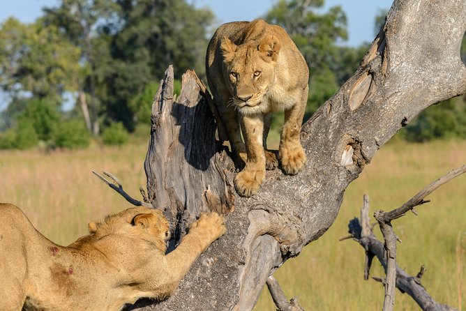 African Lion Safari - 6 Days