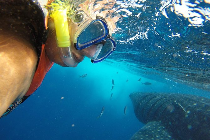 Half Day Whale Shark Tour From Playa del Carmen