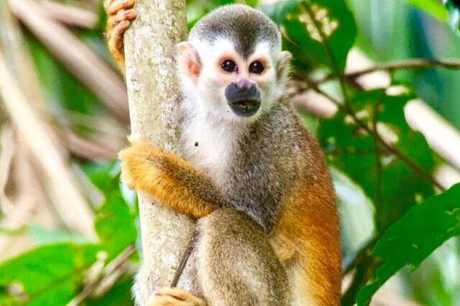 Manuel Antonio National Park wildlife tour