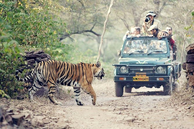 Jungle Safari - Rajaji National Park Half Day Tour