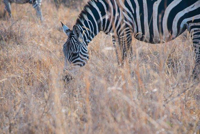 Morning Safari Nairobi Park/elephant Orphanage/giraffe Centre