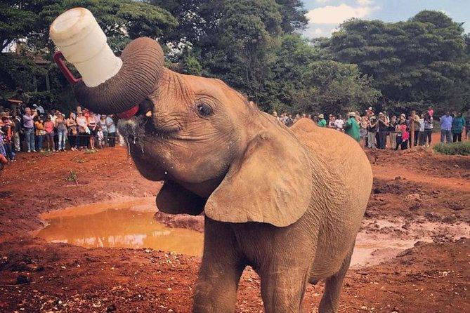 Half Day Baby Elephant,giraffe Center And Karen Blixen Museum