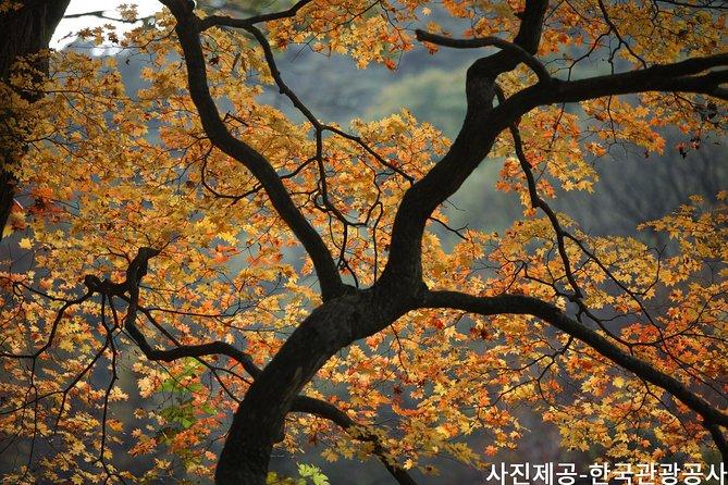 Discover Spectacular Songnisan National Park Autumn Foliage Tour