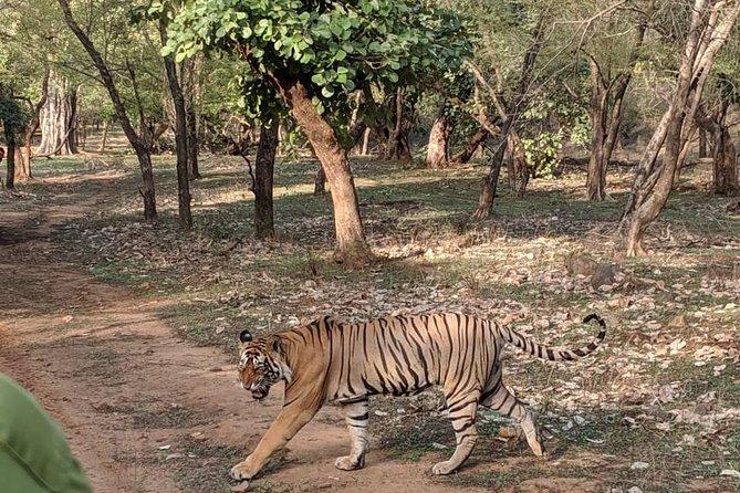 Ranthambore Evening Tiger Safari From Jaipur