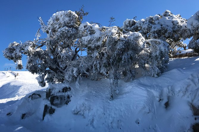 Mount Buller Snow Day Trip