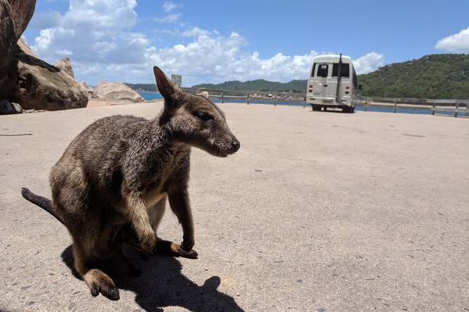 Magnetic Island Tour: Maggie Comprehensive