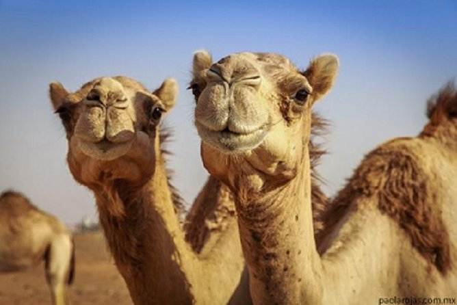 Marrakech City Tour Hop On - Hop Off + Camel Ride Around The Palm Grove