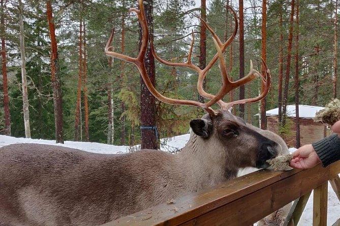 Nuuksio Reindeer Park