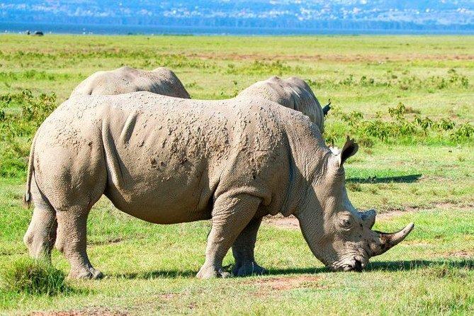 2 Days Lake Nakuru,hell's Gate And Lake Naivasha National Park Safari