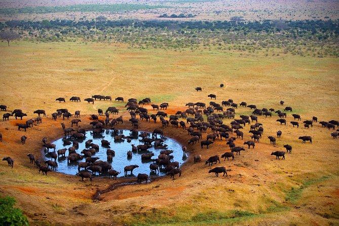 selous safaris 5days 4nights from zanzibar by flight last minute safaris