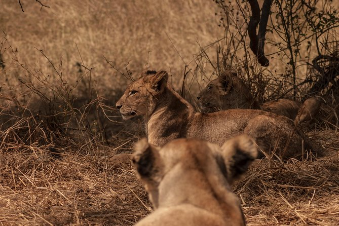 2 Days Safari To Mikumi National Park photo 1