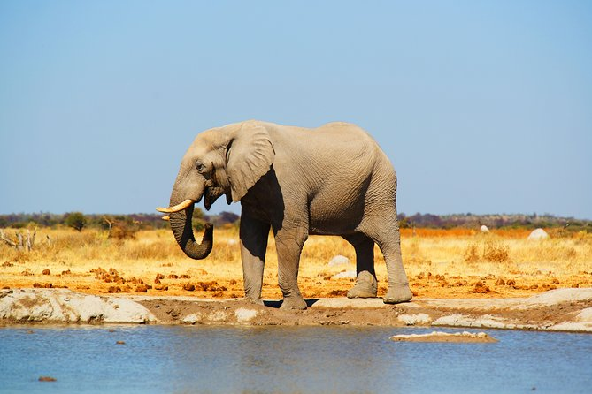 Big 5 African Safari - 5 Days