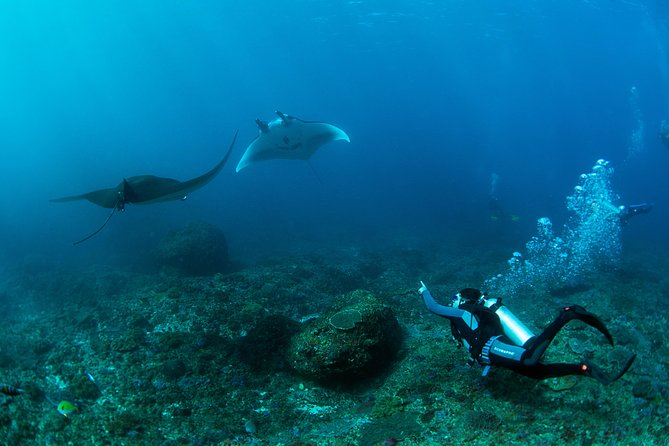 Certified Diving Package with Beach Club Lembongan