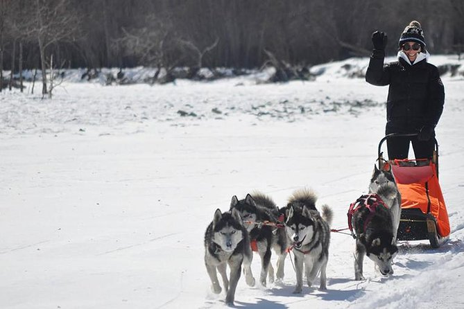 Dog sledding & Chinggis Khaan Statue tour photo 7