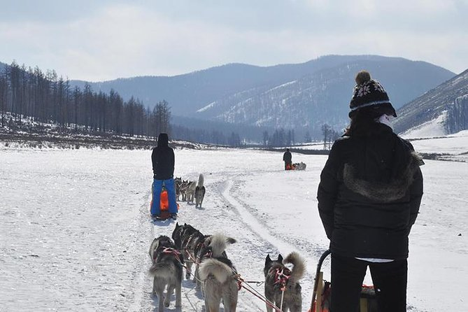 Dog sledding & Chinggis Khaan Statue tour photo 3
