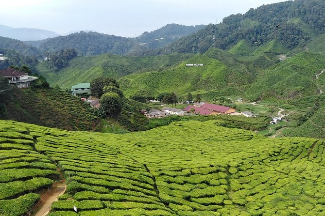 Private: Cameron Highlands 2 days 1 night Trip