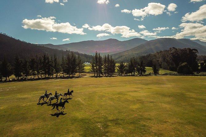 1/2 Day Picnic Trail on Horseback
